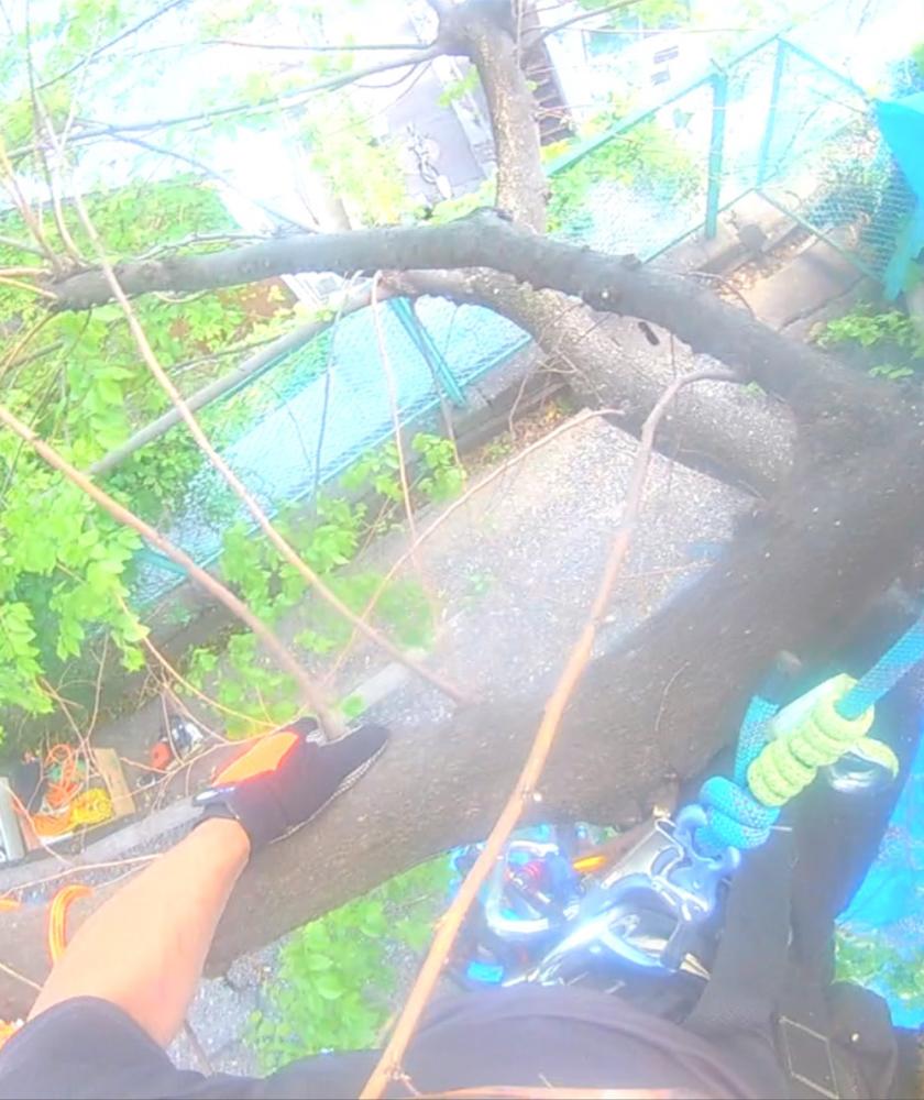 【庭木・植木の伐採/特殊伐採専門】庭木1本からお見積り・伐採いたします!