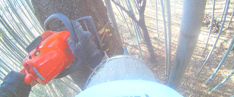 大きくなりすぎた木の伐採、電線に絡まった枝の切断、近隣に伸びた枝の切断、車両が入れない住宅地の伐採、高木や危険な木の伐採、荒れたお庭の整理、私たちにお任せください!