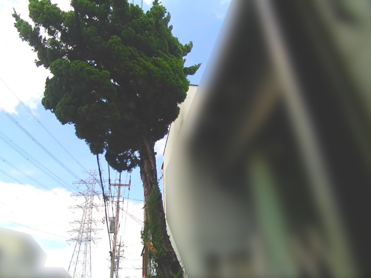 【庭木伐採 吉川市】電線にかかり道路に張り出した庭木の伐採作業前写真