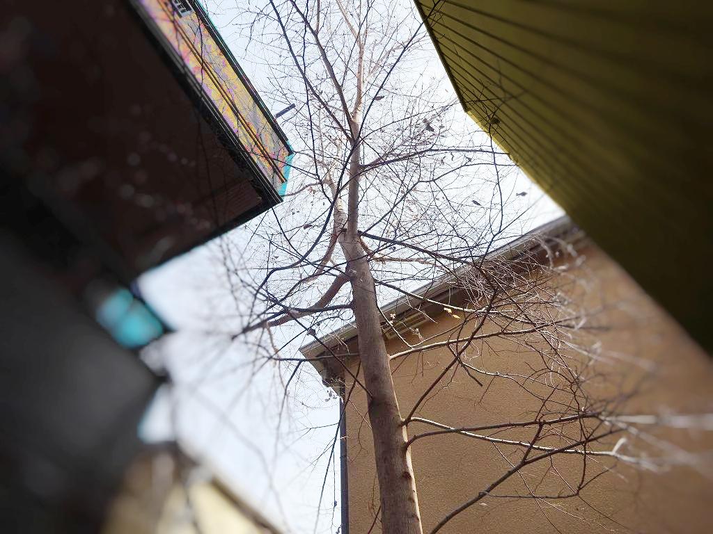 【庭木伐採 越谷市】住宅に囲まれた高木の伐採 3階屋根上作業前写真